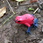 A  poison Dart Frog!!!!!!!!