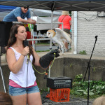 Raptors from Shavers Creek Barn Owl at DATC Festival
