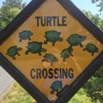 Turtle-Crossing_01