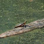 Turtle_06
