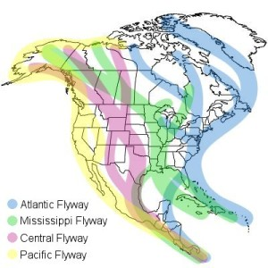north-america-migration-flyways[1]