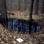 A Vernal Pool